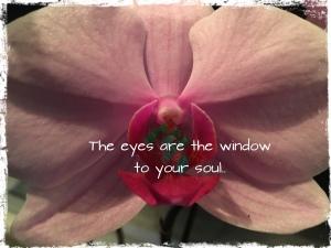 The eyes are the window to your soul øynene er sjelens speil se meg inn i øynene orkidedatter orkide