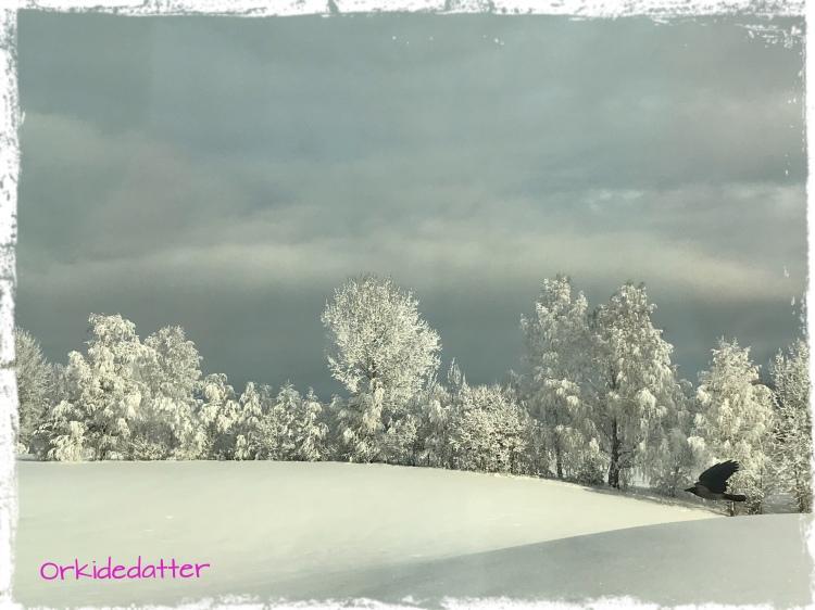 Snow, snø Norway Norwegen, cold frozen, snø vinter winter vinterlandskap picture of winter et rike av snø
