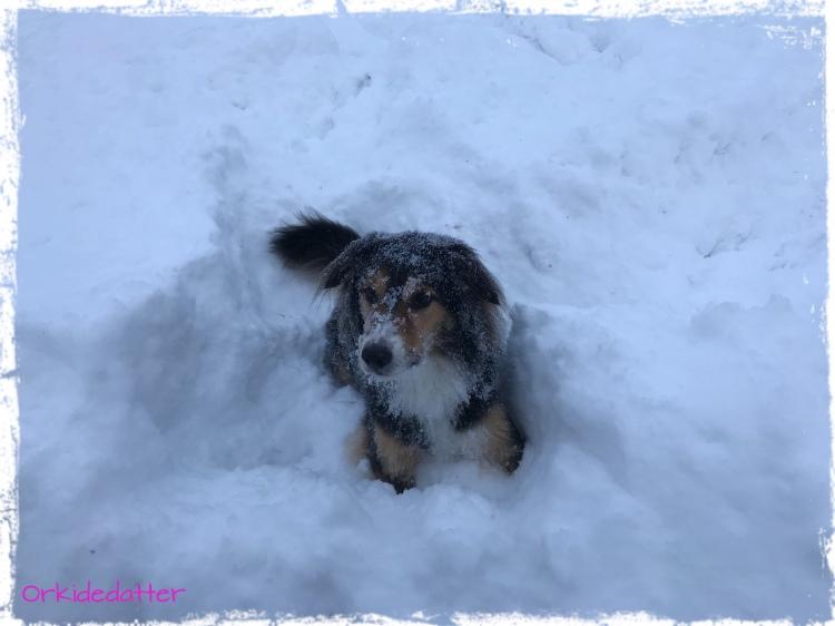 Winter, snow, Norway, dog, hund, Vopsi,